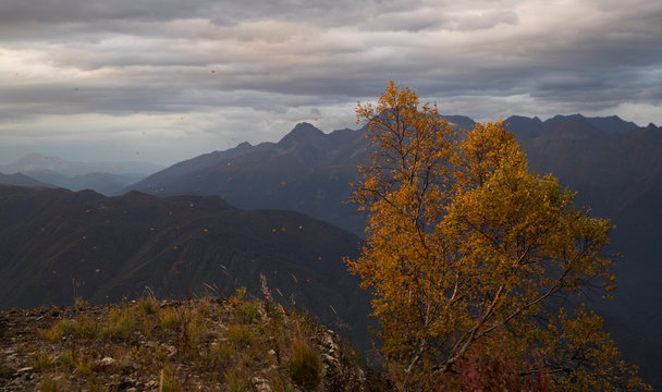 A tree and flying leaves are pictured with Caucasus mountains in the background outside Krasnaya Polyana near Sochi