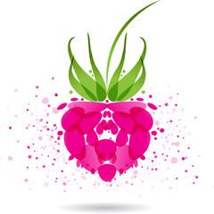 Raspberries splash vector