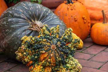 Pumpkins background, autumn colors