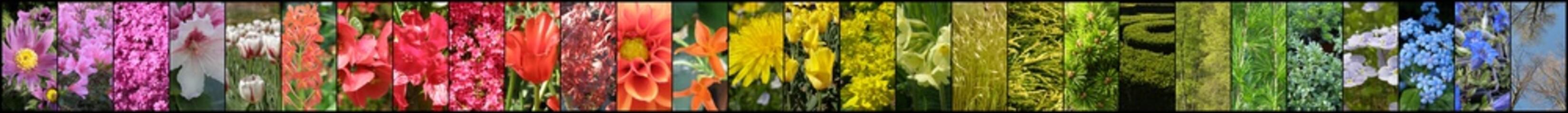 Fototapeta Tęcza z kwiatów