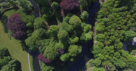 Forrest from above