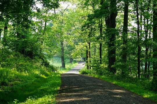 Mount Pleasant, New York, USA: A shady carriage trail winds through dense forest on a bright summer day in the Rockefeller State Park Preserve.