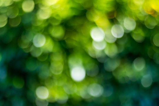 Green bokeh background in a garden, in a sunny day. Green bokeh pattern, abstract texture