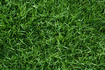 Photo sur Aluminium Herbe Clean green grass