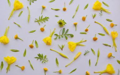 delicate composition (pattern) of yellow flowers and green leaves, top view