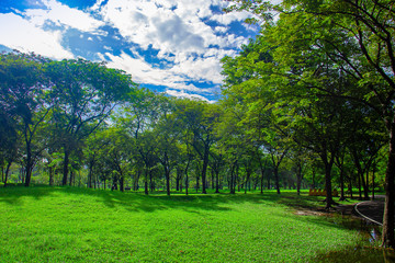Forest and blue sky. Nature green wood and grass in rainy season. Photo forest and good air concept idea.