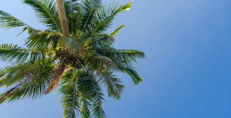 Beautiful coconut palm tree under blue sky on tropical beach and sea