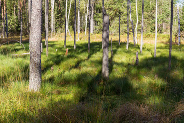 green swamp and forest