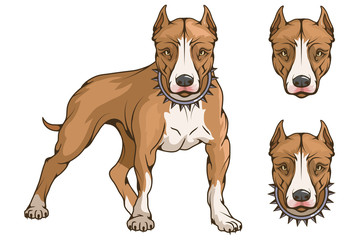pit bull terrier, american pit bull, pet logo, dog pitbull, colored pets for design, colour illustration suitable as logo or team mascot, dog illustration, vector graphics to design