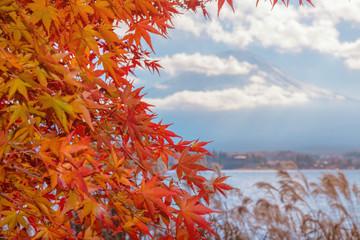Colorful autumn season & Mountain Fuji in morning fog and red leaves at lake Kawaguchiko, Japan.Mountain Fuji with colorful red maple leaves from Kawaguchi Lake - Yamanashi, Japan