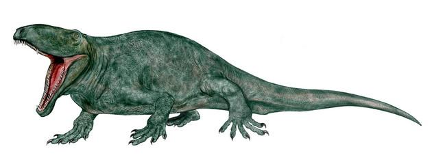 オフィアコドン。恐竜が登場する前、初期の哺乳類型爬虫類(単弓類)である。ペルム紀前期の肉食爬虫類。沼地に生息し、両生類や魚を捕食していた。大きい個体では約4メートル弱。後のディメトロドンに特徴が似ている。イラスト。