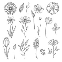 Hand drawn flowers. Vector various pictures of plants. Illustration of flower and plant, floral leaf sketch