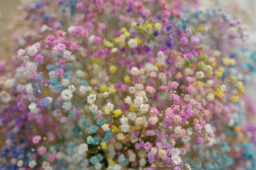 Marco view of colorful Gypsophila in full blossom creamy style