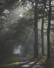 Sunlight coming through trees and foggy misty conditions on cycling and walking path. Zonlicht door de boomtoppen en mist over fietspad in Oisterwijkse Bossen en Vennen.
