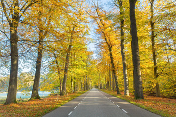 Road through dutch forest in autumn