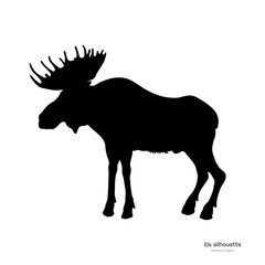 Black silhouette of elk. Isolated image of deer on white background. Wild animal of North America