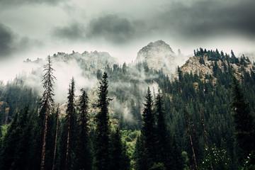 Mountain landscape. Tien Shan. The valley of the river Left Talgar. Kazakhstan