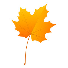 Maple leaf icon. Flat illustration of maple leaf vector icon for web design
