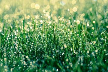 Regentag Regen fällt auf eine Wiese Erfrischung und Bewässerung