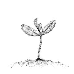 Seedling. Isolated black vector illustration in low-poly style on a white background. The drawing consists of thin lines and dots. Polygonal image on topics of vegetables or food. Low poly