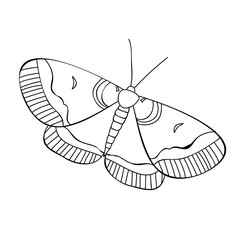 vector, isolated book coloring butterfly, insect