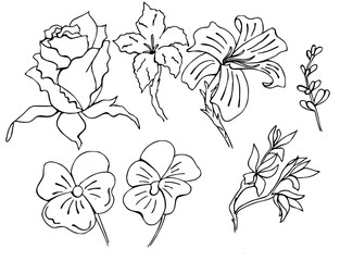 Set of hand drawn flowers in vector performed in doodle style