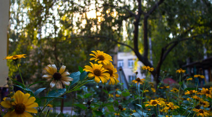 a beautiful yellow flowers against the sun