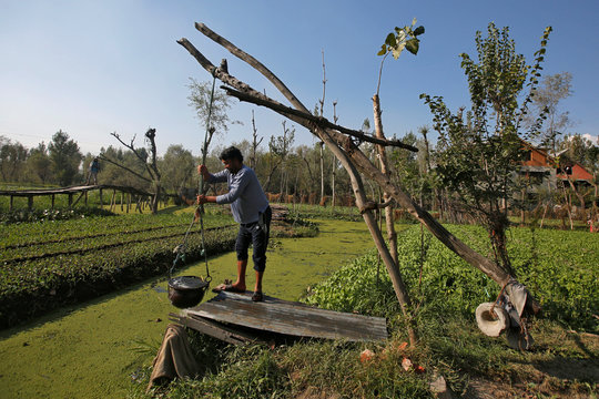 A man irrigates his floating vegetable garden in the interiors of Dal Lake in Srinagar