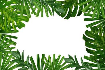 Beautiful tropical Aspidistra leaf on white background