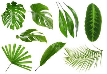 Fresh tropical monstera leaf on white background Wall mural