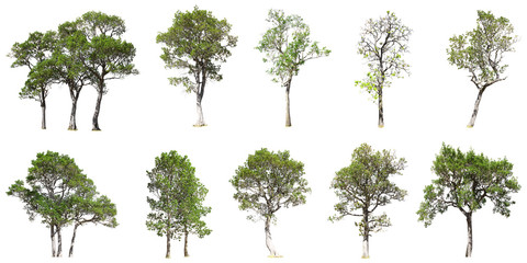 Collection of tree isolated on white background Wall mural