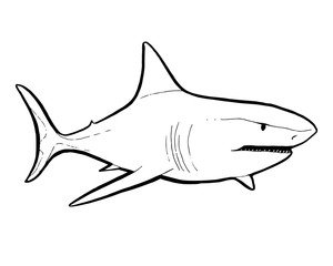 Predatory fish shark sketch illustration to engraving style