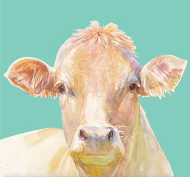 Vector illustration of a watercolor muzzle cow. Cow isolated on green background. Frontal head of a cow.