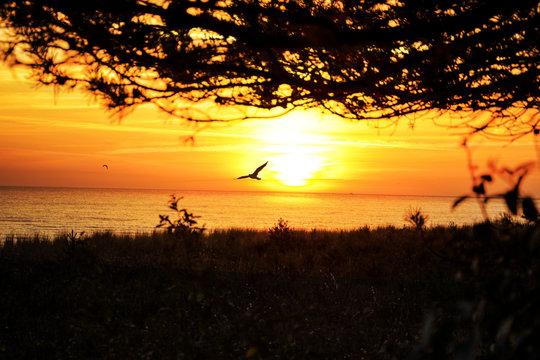 Möwe Sonnenuntergang