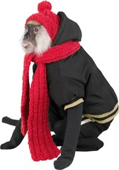 Cute monkey in black jacket and red scarf isolated on white