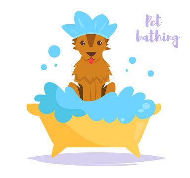 Animal bath Vector. Cartoon. Isolated art Dog Clean