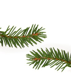 Christmas tree branch isolated on white background to create greeting cards, posters and banners