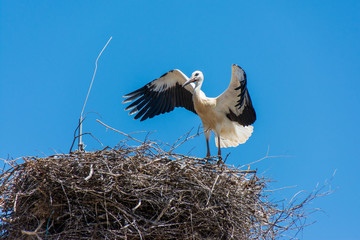 Storks in a large nest made of branches on a electricity pole in Algarve, Portugal
