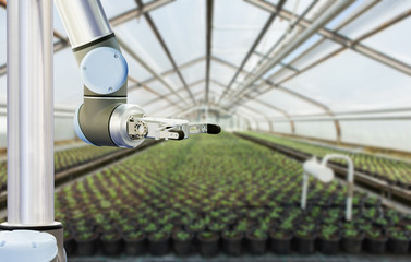 Wall Mural - The robot arm is working in a greenhouse. Smart farming and digital agriculture