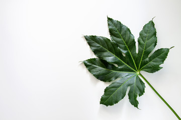 White copy space with green leaf