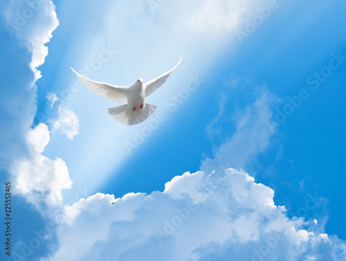 Wall mural White dove flying in the sun rays among the clouds