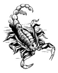 Graphic Scorpion. Aggressive astrological Insect symbol. Engraved hand drawn line art Vintage old monochrome sketch, ink. Vector illustration for label or tattoo.