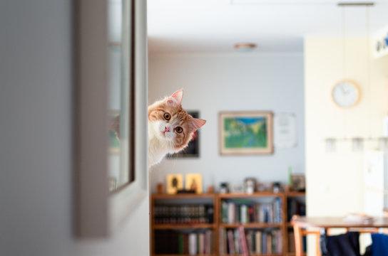 Funny pussycat peeking around the corner.