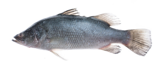 Fresh snapper fish isolated on white background,Ready for cooking.