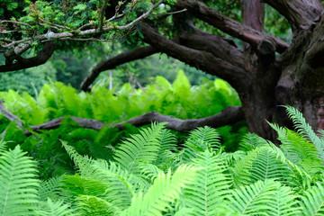 Fresh green fern leaves with dark brown tree in background.