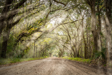 Tree tunnel at Botany bay road in Edisto, South Carolina, USA Wall mural
