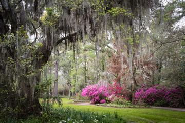 Magnolia Plantation & Gardens. Charleston, South Carolina, USA