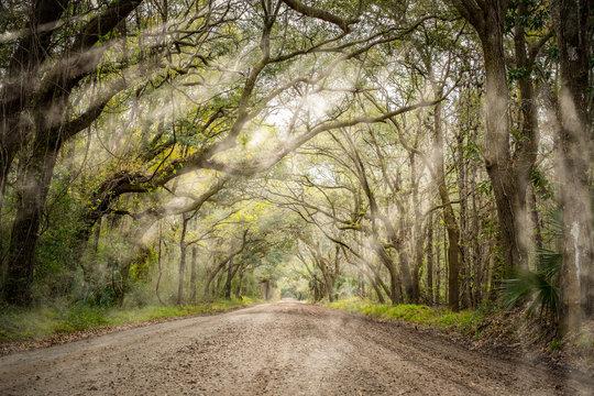 Tree tunnel at Botany bay road in Edisto, South Carolina, USA