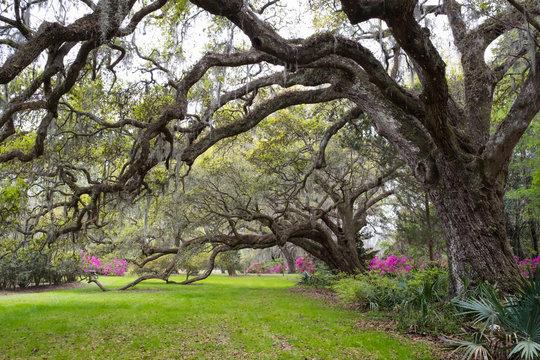 Garden landscape at Magnolia Plantation & Gardens. Charleston, South Carolina, USA
