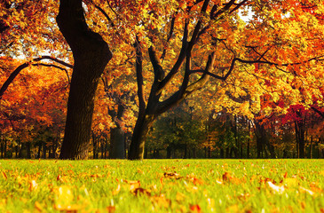 Autumn picturesque landscape.Autumn trees with yellowed foliage in sunny October park lit by sunlight